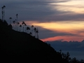 Sunset in El Valle de Cocora